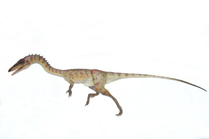 Coelophysis014